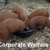 Arlington Spectator: Corporate Welfare, City Spending, $25 Animal Drop-Off Fee, and More!