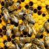 NCPA: No More Bee-Pocalypse, plus other News!